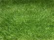 Grass Premium