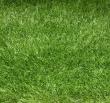Grass Lux